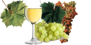 Белое вино и виноград